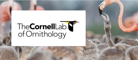 Cornell Lab of Ornithology